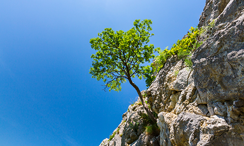 A tree growing out of a cliffside